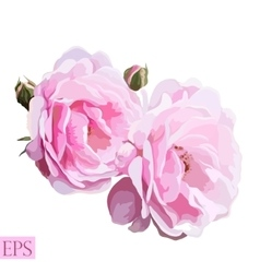 Pink rose with leaves on white background vector image vector image