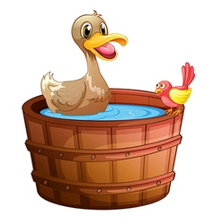 A duck and a bird taking a bath vector image
