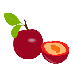 isolated pair of cherries vector image