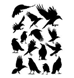rook crow raven birds animal detail silhouettes vector image
