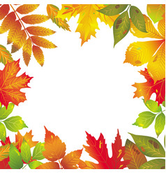Seasonal frame of autumnal leaves vector