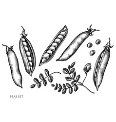 Set hand drawn black and white peas vector