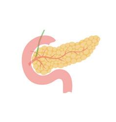 Isolated pancreas vector
