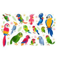 Set tropical parrots characters vector