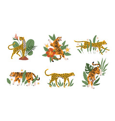 tropical leaves with tigers leopards and jaguars vector image