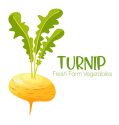turnip isolated on white background vector image
