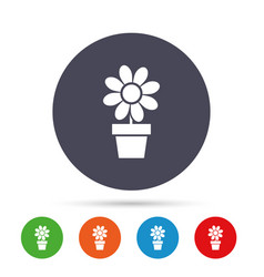 Flowers in pot sign icon bouquet of flowers vector