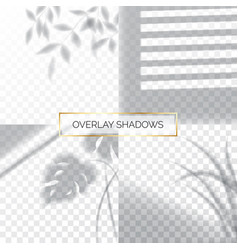 set shadows overlay effects mock up window vector image