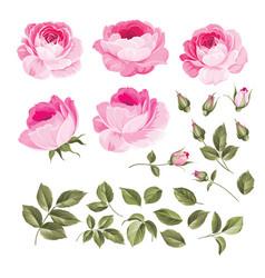 vintage roses set vector image