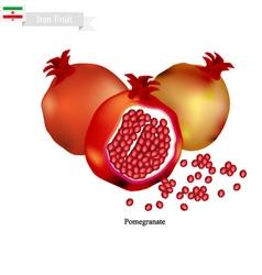 Ripe Pomegranate A Popular Fruit in Iran vector image vector image