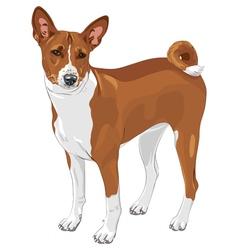 Basenji hunting dog vector image