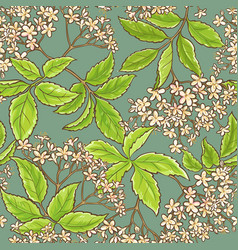 Elderflower pattern vector