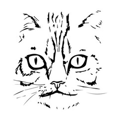 hand drawn cat face cat head vector image