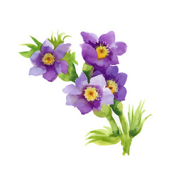 hand drawn purple flowers isolated on white vector image vector image