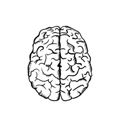 Human brain sketch in ouline style vector