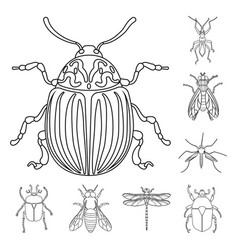 Insect and fly logo vector