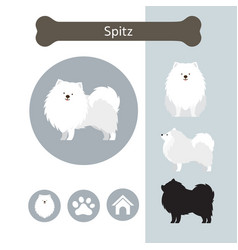 Spitz dog breed infographic vector