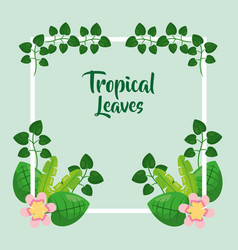 tropical leaves frame decorative flowers exotic vector image