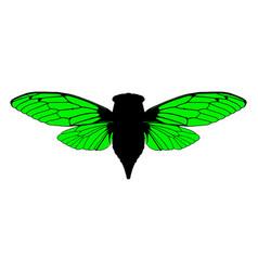 beautiful cicada vector image