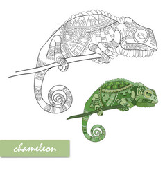 chameleon with doodle pattern coloring page vector image