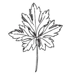 Leaf of species ranunculus have natural pattern vector