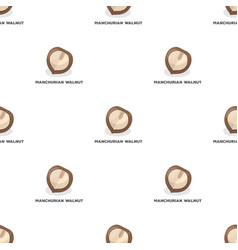 Manchurian walnutdifferent kinds of nuts single vector