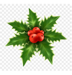 Realistic christmas holly isolated on background vector