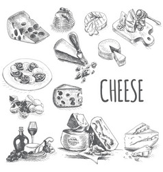 Sketch - cheese provolone vector