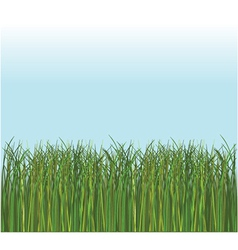 Spring grass vector image vector image