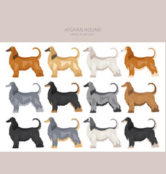 Afghan hound all colours clipart different coat vector
