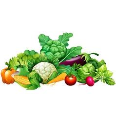 Different kind of vegetables vector image