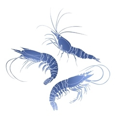 Graphic shrimps collection vector image