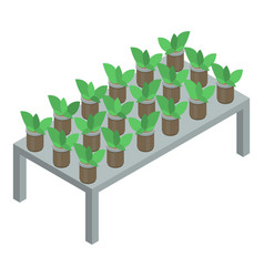 Greenhouse flower pot icon isometric style vector