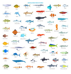 Large collection fishes world vector