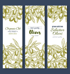 Olive branches or olives product banners vector