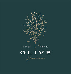 Olive tree sophisticated aesthetic logo icon vector