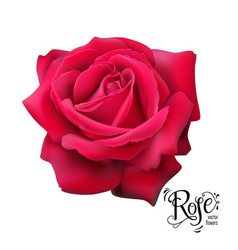 Red rose nature vector