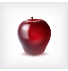 Ripr red apple vector image