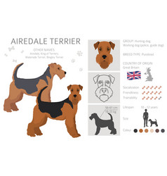 Airedale terrier all colours clipart different vector
