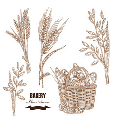 cereals set hand drawn sketch wheat rye oats vector image