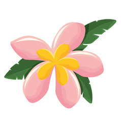 Flower with petals pink and yellow vect vector