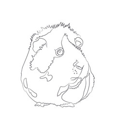 guinea pig lines vector image