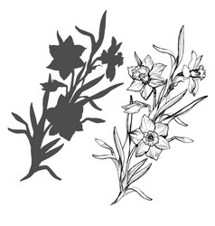 realistic hand drawn flowers daffodils narcissus vector image