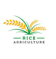 rice farming logo design vector image