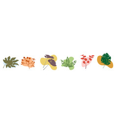 Set tropical branches and leaves plants vector