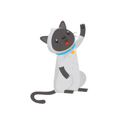 Siamese cat standing on hind legs and raising paw vector