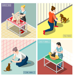 animals volunteers isometric design concept vector image