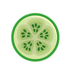 Fresh slice of cucumber organ vegetable vector