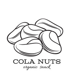 Hand drawn cola nut vector