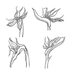 hand drawn flowers and plants vector image